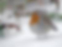 OERRR Struinen met de boswachter in het winter bos
