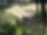 Natuurfragmentje: hert neemt modderbad