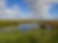 Nieuwkoopse Plassen: schoon water van groot beland