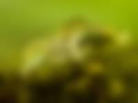 sepia paring
