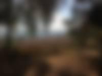 Bloeiende heide vanaf de Zijpenberg