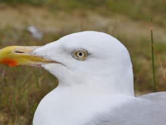 Broedvogelexcursie