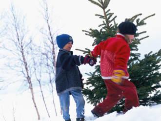 Kerstboomactie van IKEA levert natuur 64.236 euro op