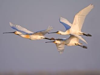 Wandelroute Groene Jonker: vogels