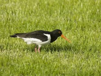 Weidevogels kijken bij de Bovenlanden, Nieuwkoopse Plassen