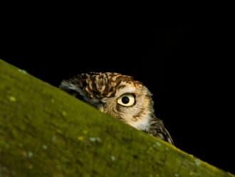 Ontdek het leven van uilen - Veluwezoom