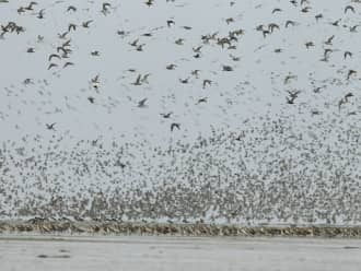Trekvogelexcursie