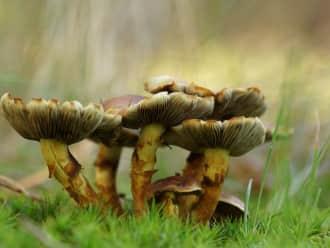 Lekker Landschap: op zoek naar paddenstoelen!