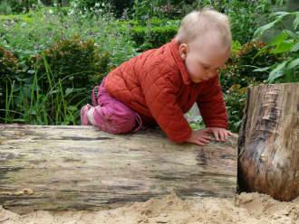 Kruipen op een boomstam