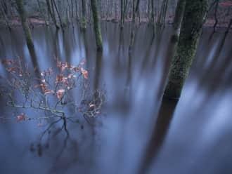 Leuvense bossen beek