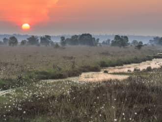 Oranje zon over het Fochteloerveen