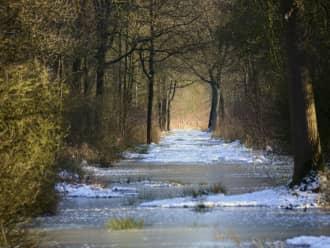 wandelen in Kempen-Broek