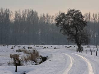 Wandeling Veluwemeerkust-Hulshorst