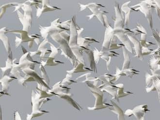 Vogels texel