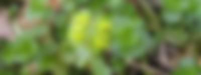 goudveil - niek backus