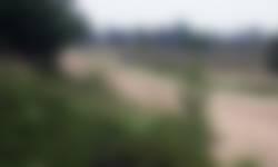Langs oude karrensporen