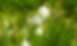 In Fort Hinderdam vind je de zeldzame plant het zomerklokje
