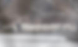 Grote zilverreigers verzamelen in Ackerdijkse Plassen