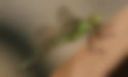 glazenmaker - moniek rozemeijer