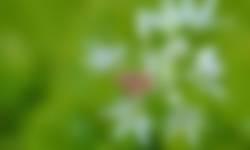 Daslook voorjaarsbloeiers