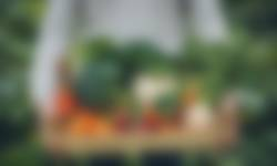 Rotterdam de boer op - krat vol groente
