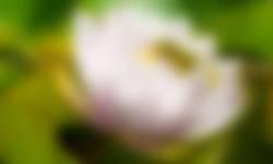 groene kikker op waterlelie