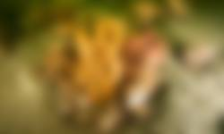 Witte buisjesspons