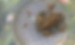 Voorstonden knoflookpad mannetje