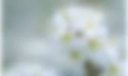 bloesem arboretu poort bulten