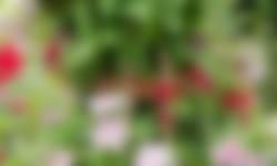 Klimplanten in je tuin tuintip