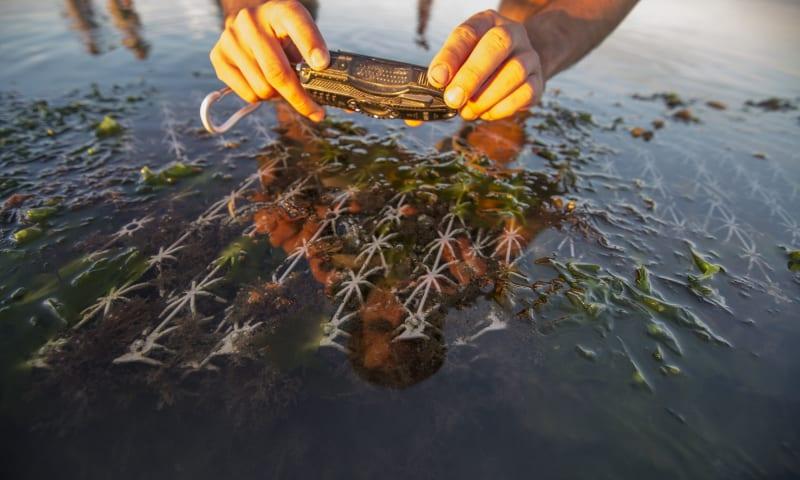 Onderzoek naar kunstriffen (BESE) bij Griend