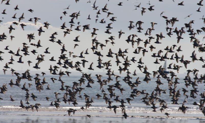 Vogels rondom Griend