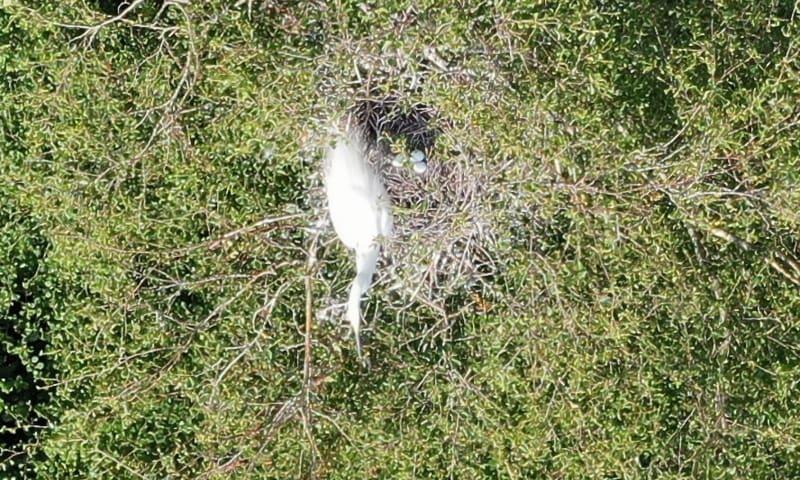 Nest met 3 eieren