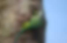 Groene flits en veel kabaal