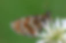 Akker voor vlinders