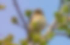tjiftjaf was aan het zingen op deze mooie lentedag