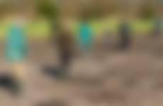 Werkdag vrijwilligers  Melkschuur Zuidpolder hooien van de heuvels 3