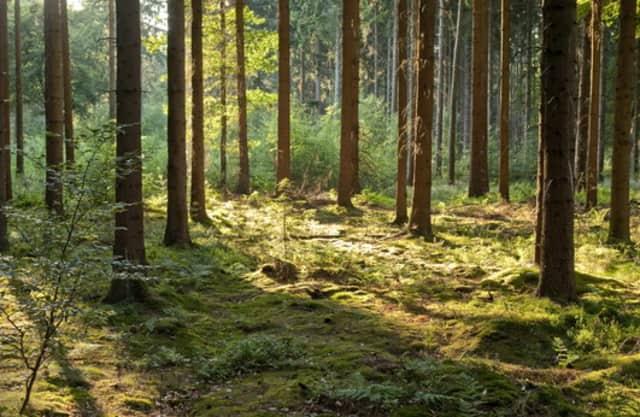 Gevarieerde bossen
