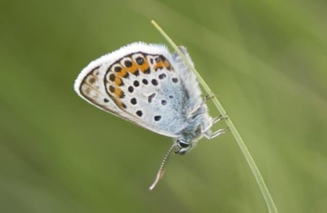 Sier- en Vlindertuin Berkenhof