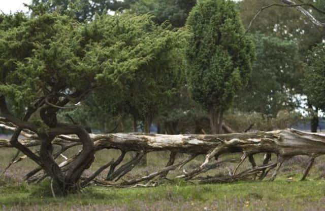 Naar een natuurlijker bos