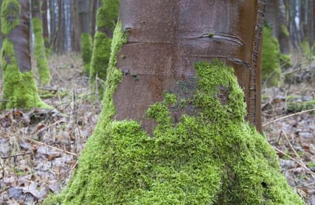 Bomen met sokken van mos