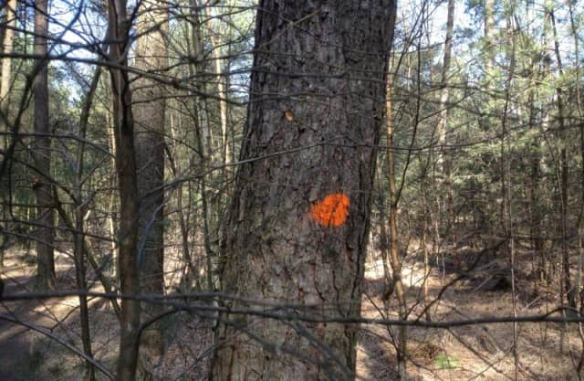 Bomen met stip