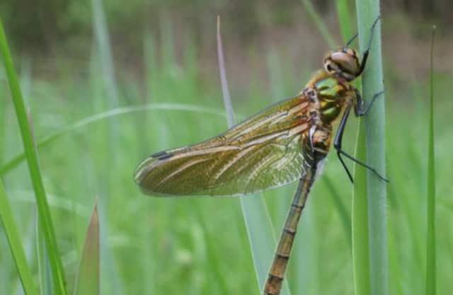Insectenrijkdom