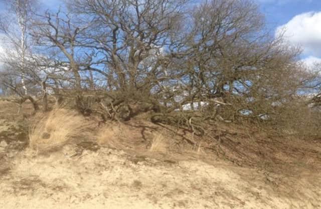 Ondergestoven bomen