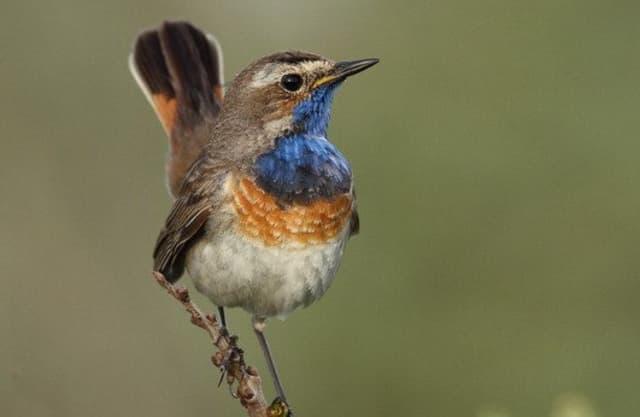 Vogels in De Wieden