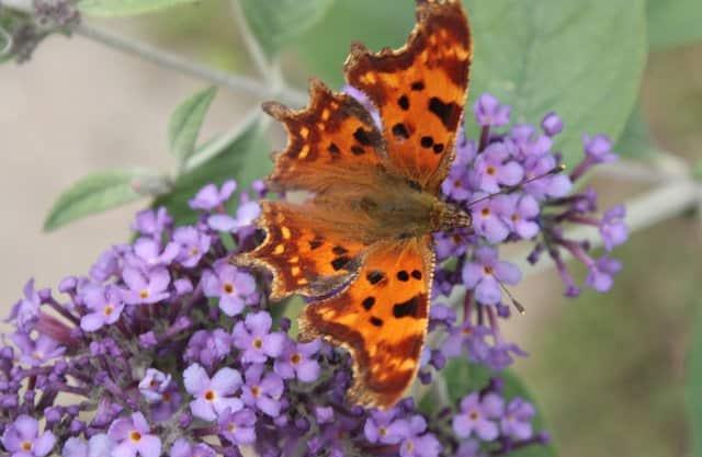 Vlinders en kersenbloesem