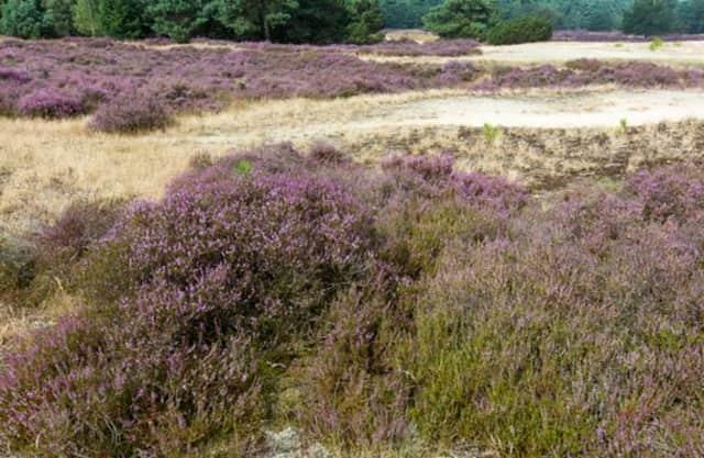 Heide en heuvels