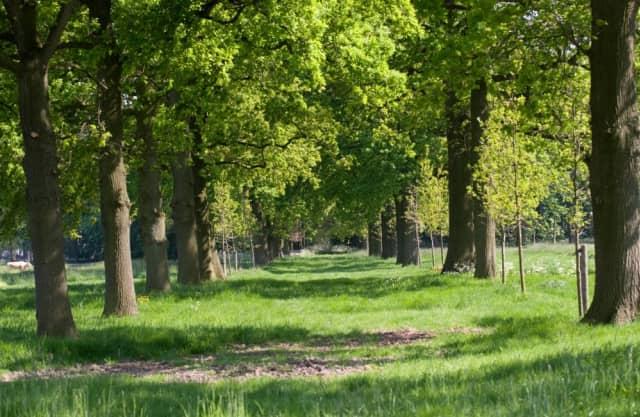 Klein Limburg