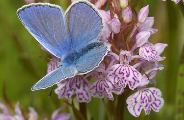 Bijzondere planten en vlinders