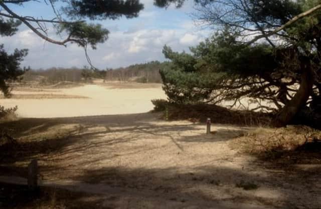 Klimboom en rustpunt